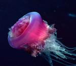 L'anno delle meduse