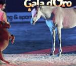 Rubato Charlie, il cavallo più piccolo del mondo