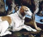 I cani da caccia più affettuosi